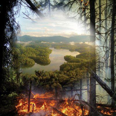 Incêndios: prevenir é melhor do que apagar. | @infraeambiente