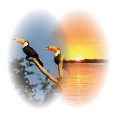 Conservar para sobreviver! Faça sua parte I @ihp_pantanal_