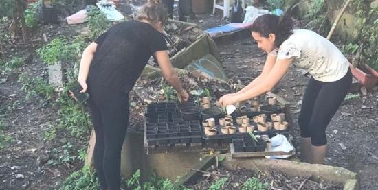 Mutirão da Virada Sustentável na Horta da Formiga