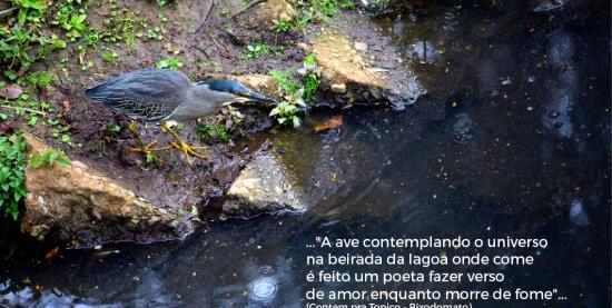 Exposição Seres Vivos   A Poética da Biodiversidade