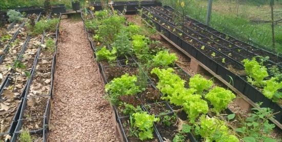 Plantio de Equinócio de Outono | Agricultura Sintrópica