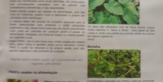Roda de Conversa PANC - Plantas alimentícias não convencionais