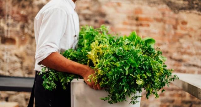 Alimentação, Gastronomia e Saúde