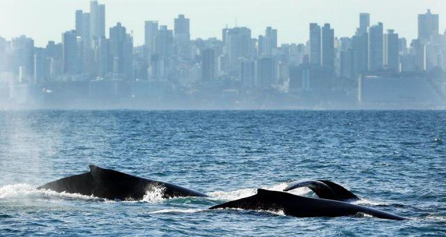 Projeto Baleia Jubarte | Exibição do documentário Baleias Urbanas + Roda de Conversa