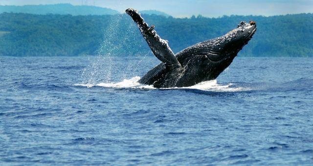 Projeto Baleia Jubarte | Stand Expositivo