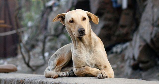 Projeto Castrampinha |  O controle populacional de animais em situação de rua